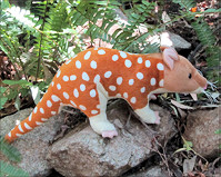 Quoll Soft Toy